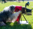 epa04723961 A Tibetan Terrier named Tom Tom looks through a camera during a press conference for the upcoming trade fair 'Hund & Katz' (Dog & Cat) in Dortmund, Germany, 28 April 2015. The fair will run from 08 to 10 May.  EPA/MAJAHITIJ  Dostawca: PAP/EPA.