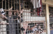 syrian-prison-insurrection-set-end-release-inmates-agreed-1462787257